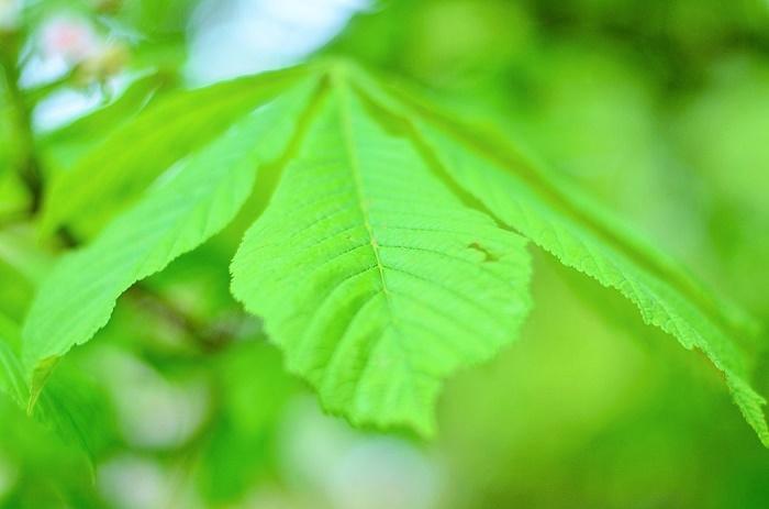 nachhaltig leben leicht gemacht_nachhaltig leben_Nachhaltigkeit_strom sparen_Wasser verschwenden_Bio Produkte kaufen_Essensreste zubereiten