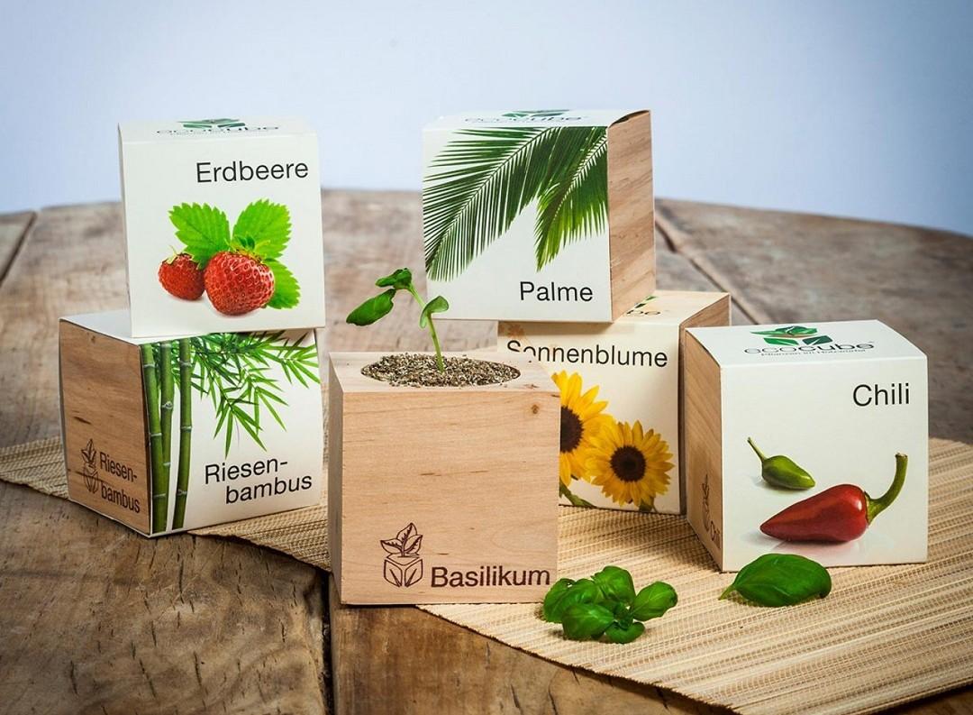 ecocube-pflanzen-im-holzwurfel-radbag_weihnachtsgeschenke_annanikabu