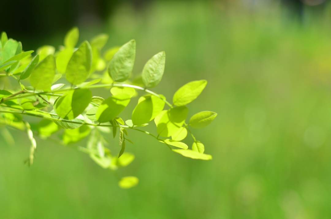 Dr. Hauschka_Bad Boll_Sonnenhof_Melissenfrisch_Demeter_Bauernhof_Naturliebe_Annanikabu_Nachhaltigkeit_nachhaltige Beautyprodukte (4)