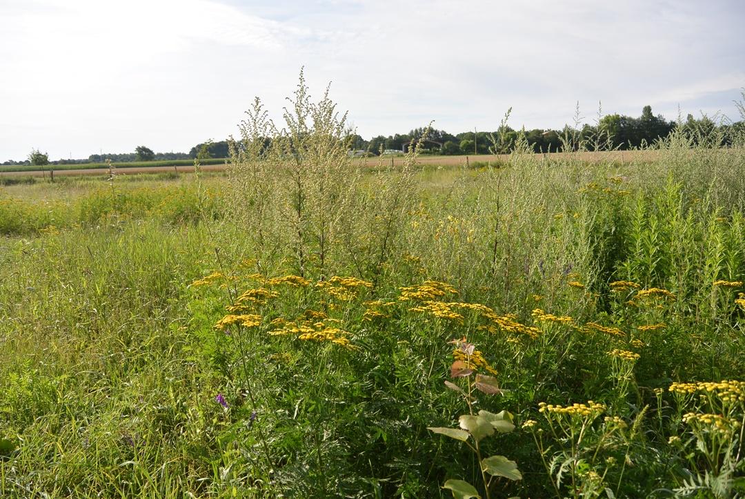 Hof Isenbüttel_Demeterhof_Biobauernhof_Der Hof_Bauernhof Alltag_Ein Tag auf dem Bauernhof_Annanikabu_Reiseblog (183)