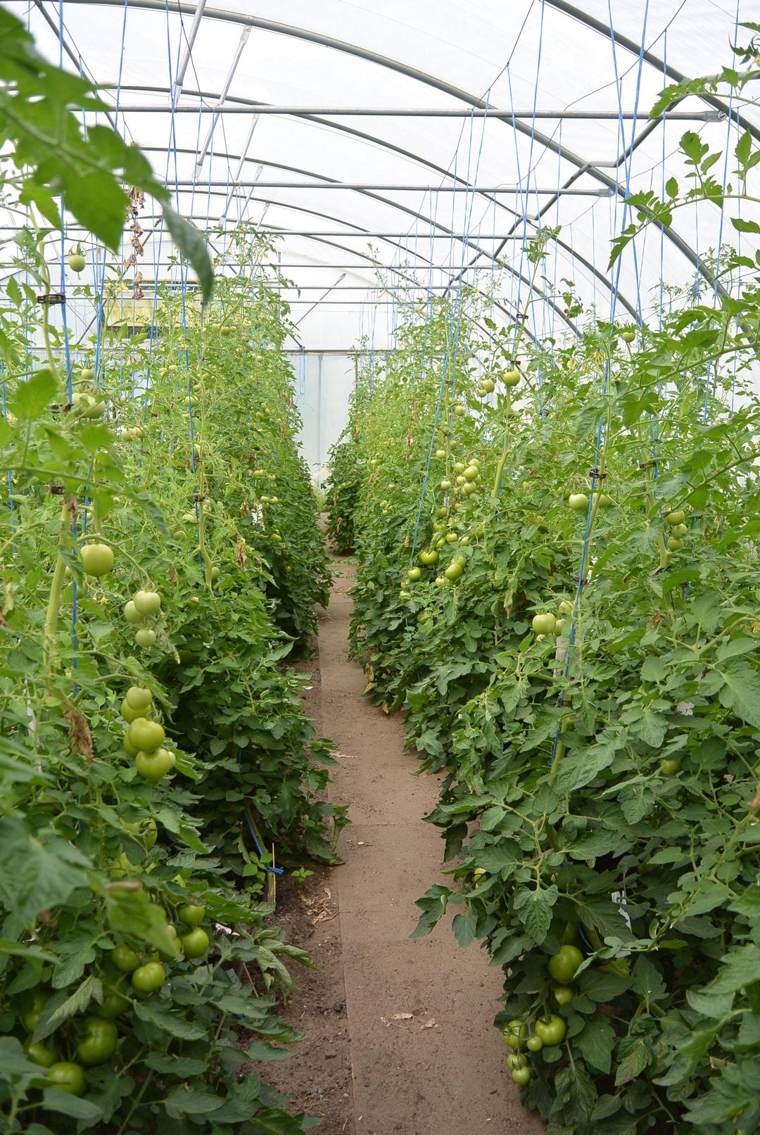 Hof Isenbüttel_Demeterhof_Biobauernhof_Der Hof_Bauernhof Alltag_Ein Tag auf dem Bauernhof_Annanikabu_Reiseblog (198)