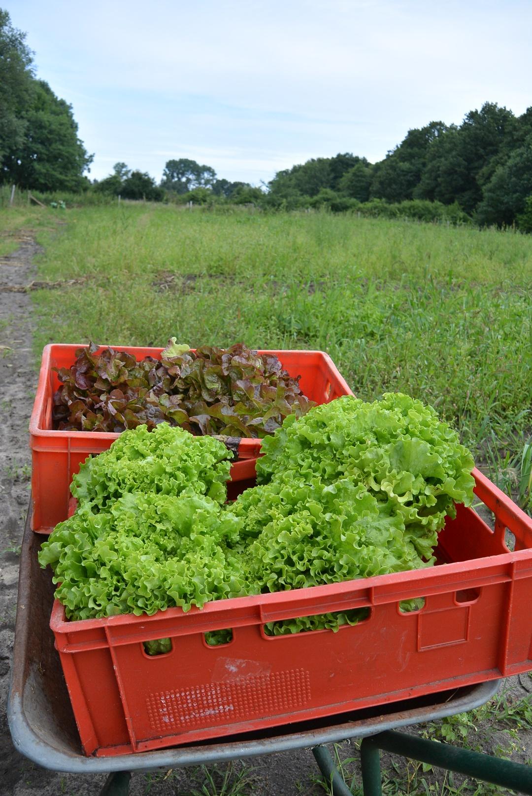Hof Isenbüttel_Demeterhof_Biobauernhof_Der Hof_Bauernhof Alltag_Ein Tag auf dem Bauernhof_Annanikabu_Reiseblog (27)